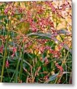 September Grasses Metal Print
