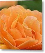September Rose Metal Print