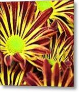 September's Radiance In A Flower Metal Print