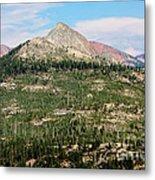 Sequoi National Park Metal Print