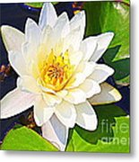 Serenity In White - Water Lily Metal Print