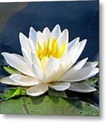Serenity On The Lily Pond Metal Print