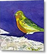 Serinus  Canaria  Aka The Canary Metal Print