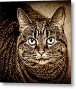 Serious Tabby Cat Metal Print