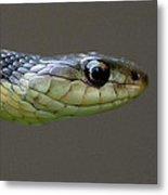 Serpent Profile Metal Print