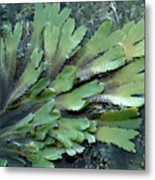 Serrated Or Toothed Wrack Metal Print