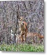 Sertoma Park Deer Metal Print