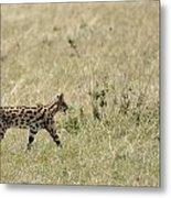 Serval Hunting Metal Print