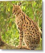 Serval Leptailurus Serval Metal Print