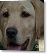 Service Dog In The Making Metal Print