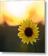 Setting Sun Flower Metal Print