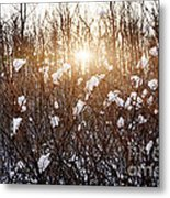 Setting Sun In Winter Forest Metal Print