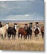 Seven Horses On The Range Metal Print