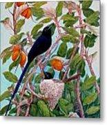 Seychelles Paradise Flycatcher Metal Print