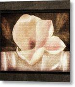 Shabby Vintage Magnolia Metal Print