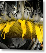 Shaded Sunflower Metal Print