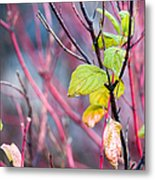 Shades Of Autumn - Reds And Greens Metal Print