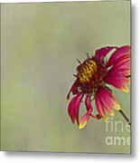 Shades Of Beauty Metal Print