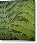 Shades Of Green Metal Print by Jeff Swanson