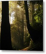 Shadow Dreams Metal Print
