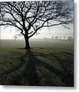 Shadow Tree Metal Print