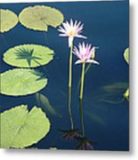 Shadows And Reflections Metal Print