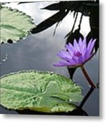 Shadows On A Lily Pond Metal Print
