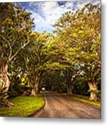 Shady Lane Metal Print