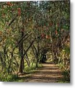 Shady Path Metal Print