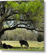 Shady Rest Metal Print