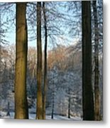 Light And Shadows In Wintertime Metal Print