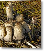 Shaggy Ink Caps - Coprinus Comatus Metal Print