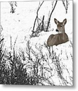 Share The Land Metal Print