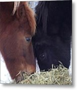 Best Buddies Sharing A Delicious Meal Metal Print