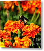 Sharing The Nectar Of Life 02 Metal Print