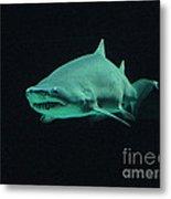 Shark-09441 Metal Print