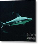 Shark-09451 Metal Print