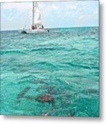 Shark N Sail I Metal Print