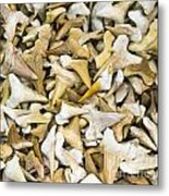 Sharks Teeth Metal Print