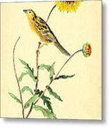 Sharp-tailed Bunting Metal Print by Philip Ralley