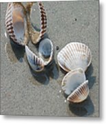 She Sells Sea Shells Metal Print