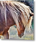 She Tossed Her Mane - Wild Pony Of Assateague Metal Print