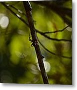 She Waits In Darkness Metal Print