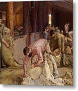 Shearing The Rams  Metal Print