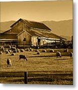 Sheep And Barn Metal Print