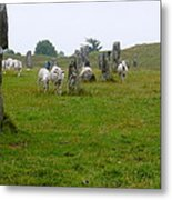 Sheep And Stones At Avebury Metal Print
