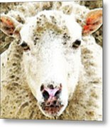 Sheep Art - White Sheep Metal Print