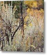 Sheep Creek Canyon Wyoming 11 Metal Print