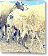 It's So Sheep To Be In The Middle Of A Crowd Metal Print