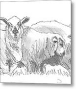 Sheep Drawing Metal Print